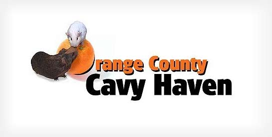 Q2 2013 Featured Guinea Pig Rescue: Orange County Cavy Haven