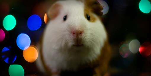 Share Your Christmas List and Make Money for Guinea Pig Rescues