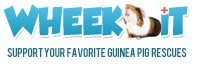 Donate Money to Guinea Pig Rescues