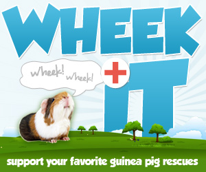 Raise Money for Guinea Pig Rescues
